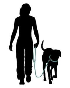 Wie bringe ich meinem Hund Bei Fuß bei
