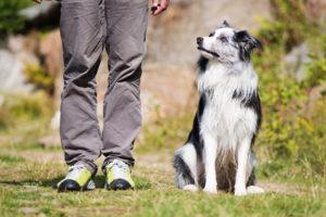 gut erzogerner Hund macht Bei Fuß