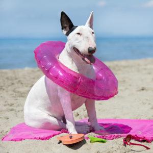Die spielerische Methode um Ihrem Hund Sitz beizubringen