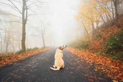 Ihrem Hund Bleib beibringen
