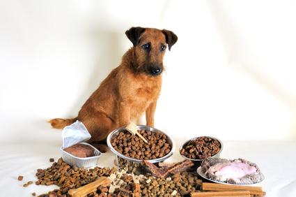 Hund Sitz beibringen mit Futterlockmethode