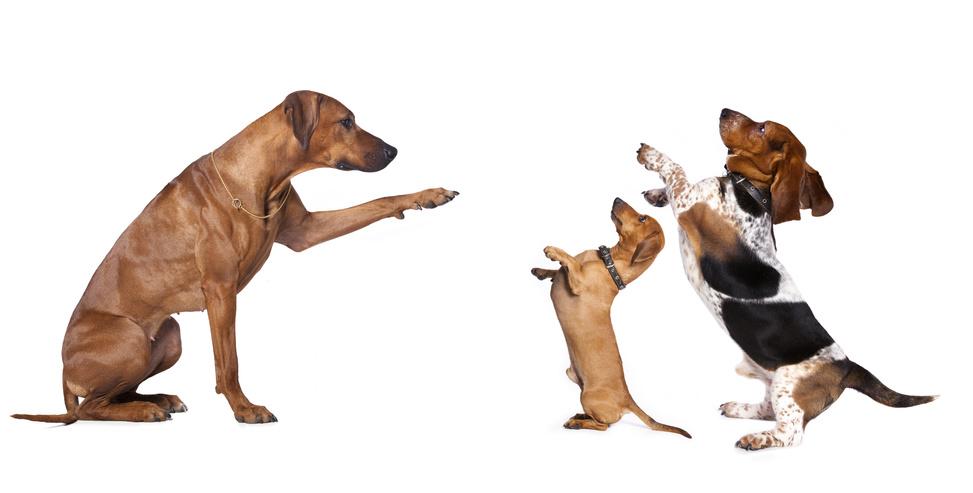 Kommandos die ein Hund können sollte!